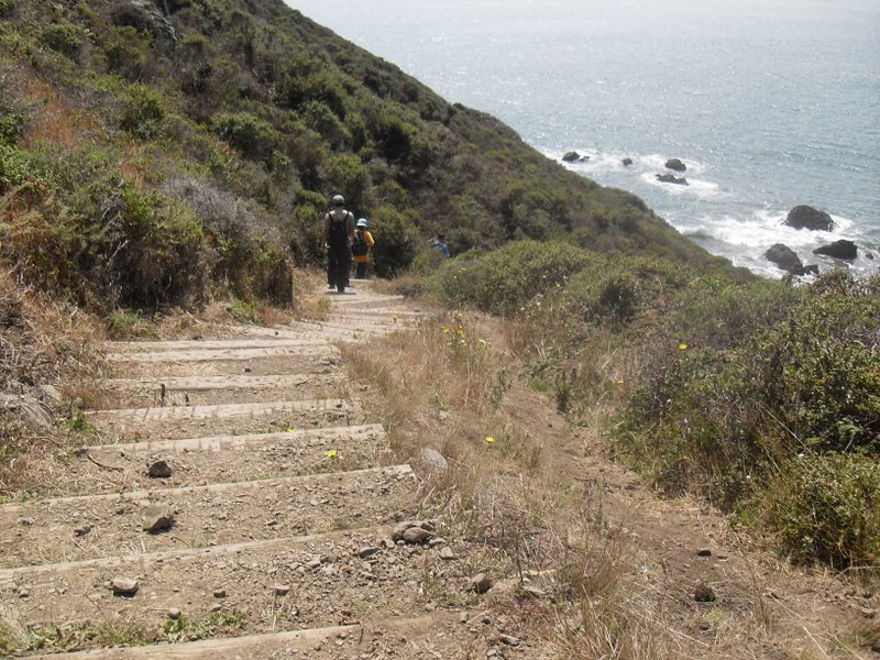 On The Ridge Trail At Muir Beach