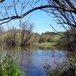 Fox Pond at Healdsburg Ridge Open Space Preserve.