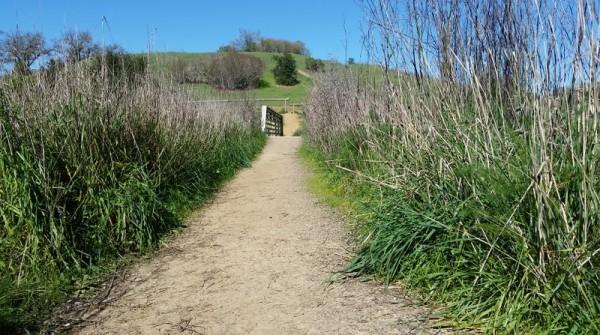 Beautifully kept trails at Healdsburg Ridge.