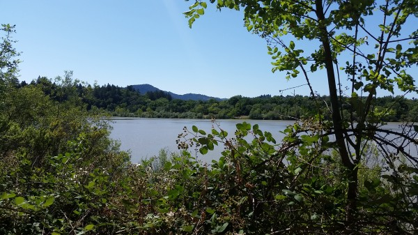 View of Lake Benoist from the trail. Blackberries will be in ripe in about a month.