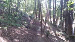 The descent from Redwood Hill Trail.