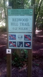 Redwood Hill Trail adds a short climb to your hike.