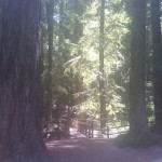 Redwood grove, in picnic area near parking lot.