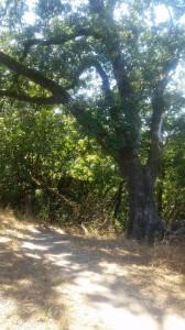 Redwood Hill Trail