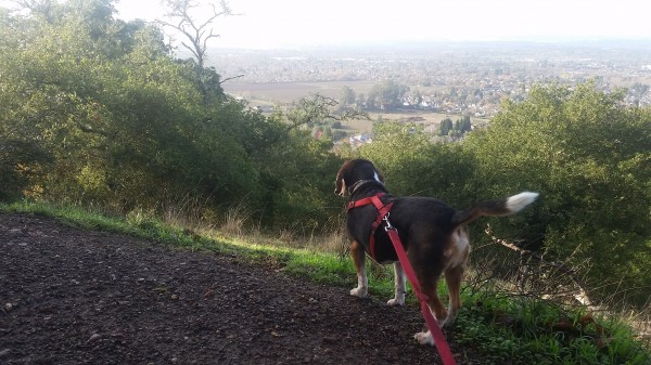 Sylvester takes in the view of Windsor, from the top of Alta Vista Trail.