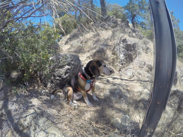 Sylvester stops for a break on the Oathill Mine Trail.