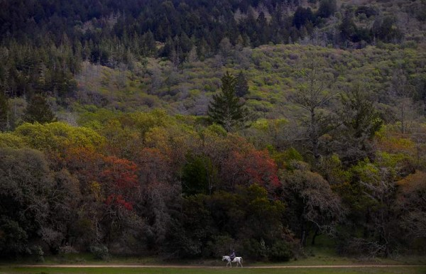 Rosanna Morse and her Arabian, Mystic , of Sebastopol , plod along the Lake Trail near Lake Ilsanjo, at Annadel State Park. (Kent Porter/ The Press Democrat, 2011)