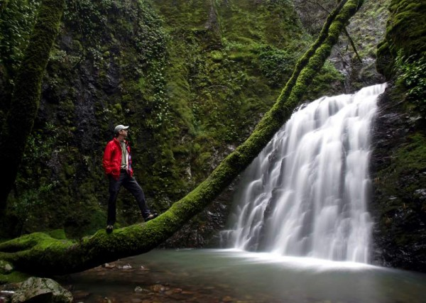 Near the headwaters of Redwood Creek in the hills west of Napa, Tom Devitt takes time out from surveying native salamanders to take in the splendors of the Devil's Well. (John Burgess/ PD File photo)